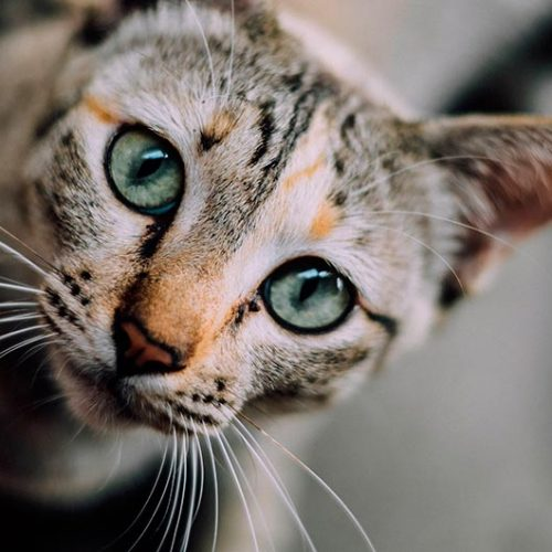 cat-face-1081951_1920